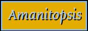 Amanitopsis_ pagtit