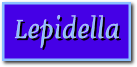 Lepidella_pagtit