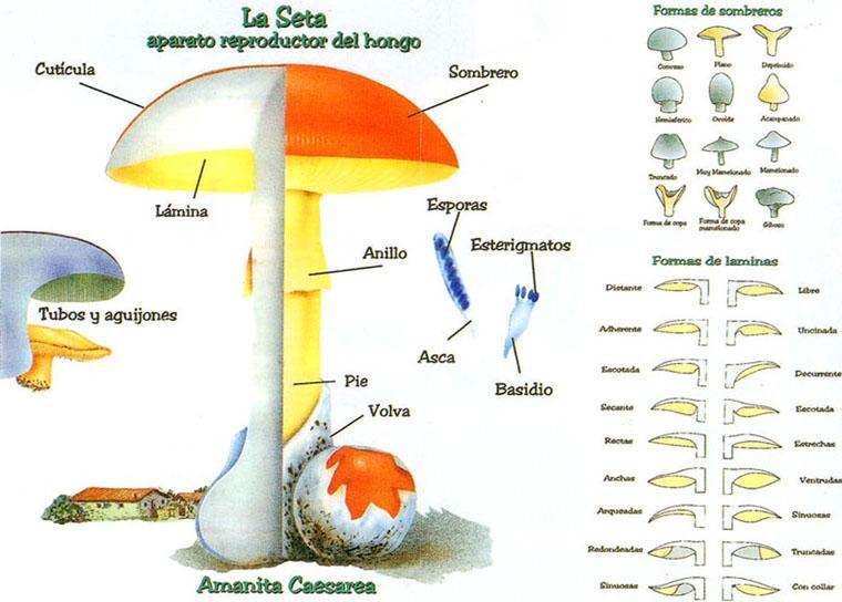 La-seta1