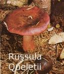 Foto Russula-Queletii