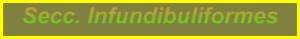 up_seccinfundibuliformes