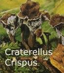 Foto Craterellus-Crispus